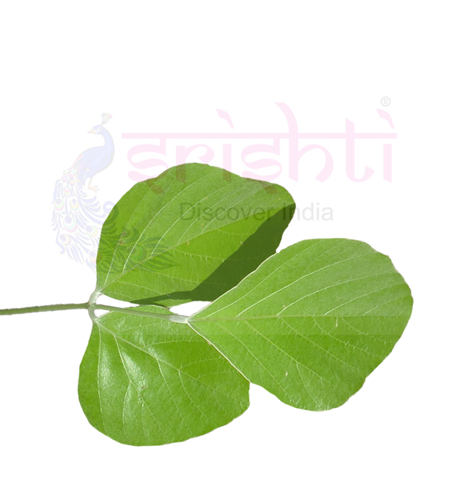 SRFU-Fresh Palash Leaf fresh