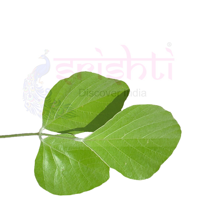 SRFU-Palash Leaf fresh